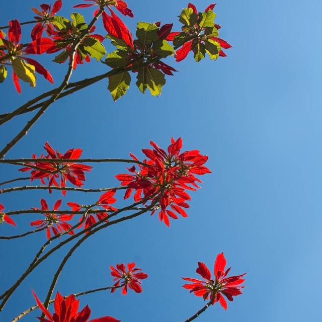 """""""Red flowers on tree"""" stock image"""