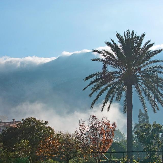 """""""Mallorca winter landscape"""" stock image"""