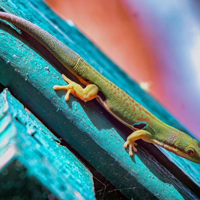 """~ Lizard of Oz ~"" stock image"