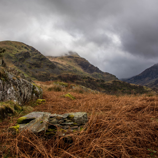 """""""Dead Bracken, Moss and Mountains."""" stock image"""