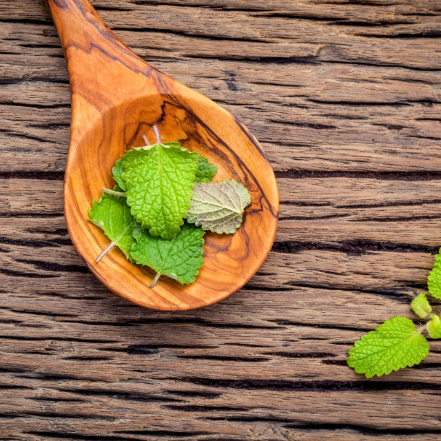 """Fresh lemon balm leaves in spoon setup with flat lay on shabby wooden table...."" stock image"