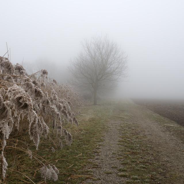 """Dans le brouillard"" stock image"