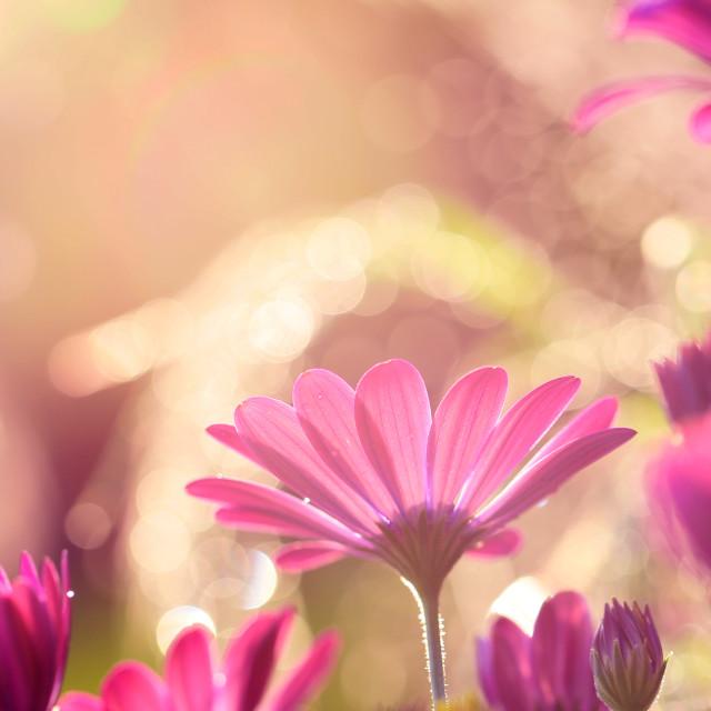 """Flower from my garden"" stock image"
