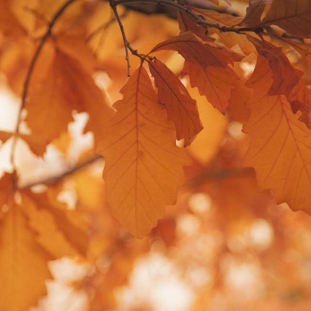 """Leaves on a sunny morning, Fall season"" stock image"