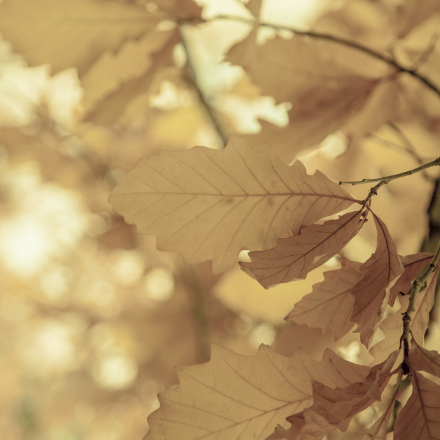 """Fall season, sepia"" stock image"