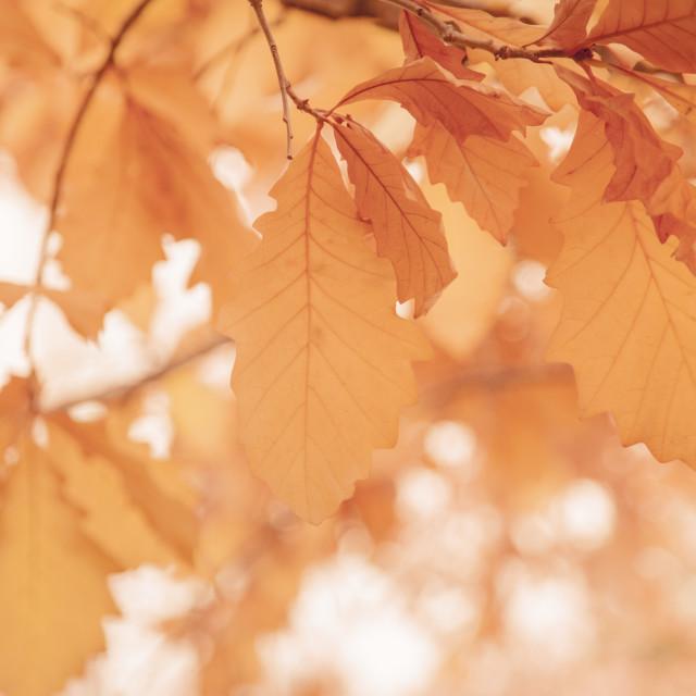 """Tree, Fall season"" stock image"