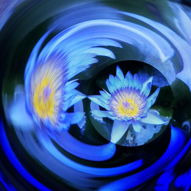"""Flower Swirl"" stock image"