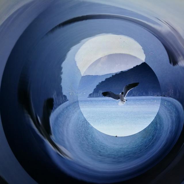 """Seagull Swirl"" stock image"