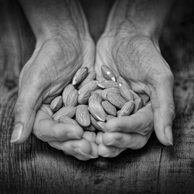 """hands holding almonds"" stock image"