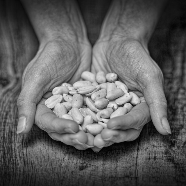 """hands holding peanuts"" stock image"