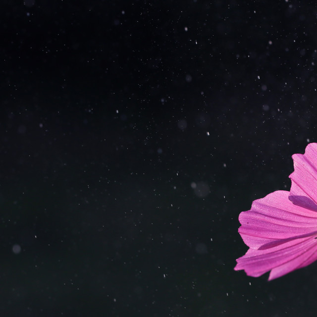 """""""Cosmos plant on the background of space"""" stock image"""
