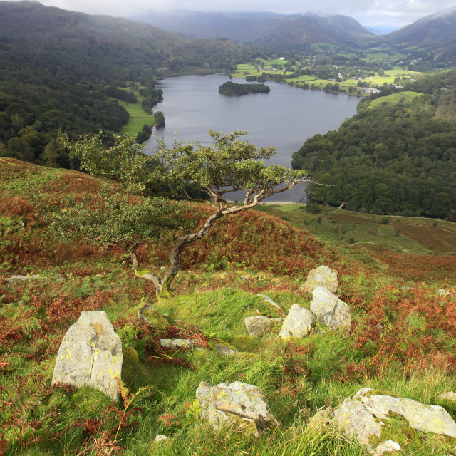 """Landscape view over Grasmere water from Loughrigg Terraces, Lake District..."" stock image"