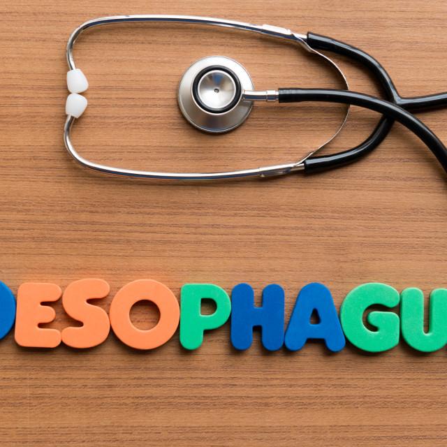 """oesophagus"" stock image"