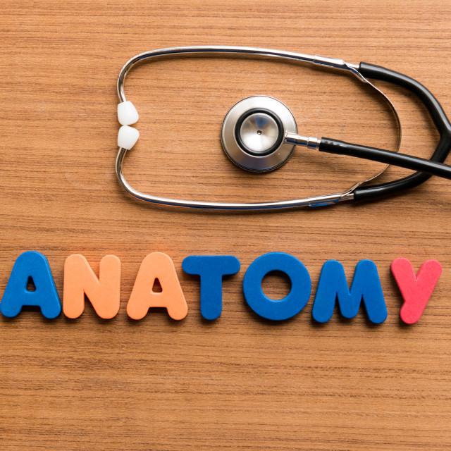 """Anatomy"" stock image"