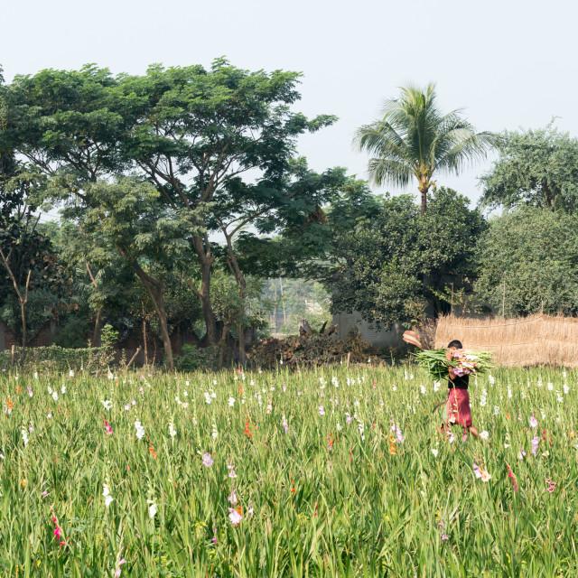 """Farmer on local sustainable organic farm"" stock image"