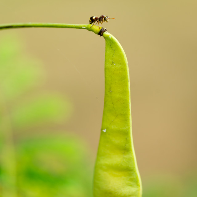 """""""Ant on guard"""" stock image"""