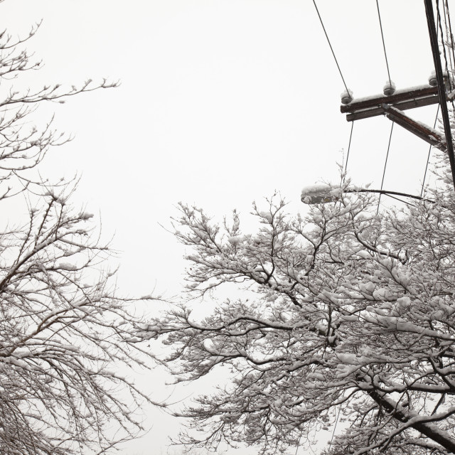 """Snow, trees and electricity lines"" stock image"