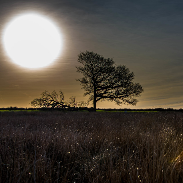 """""""Light of a Cold Dawn"""" stock image"""