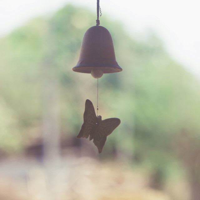 """""""butterfly //wind power 