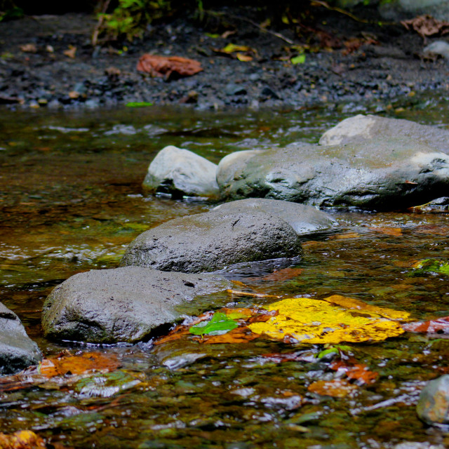 """The stony river walkway #Celebrateafrica Nature"" stock image"