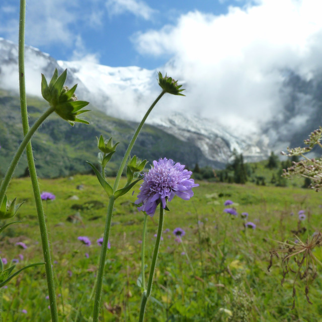 """Alpine Meadow"" stock image"
