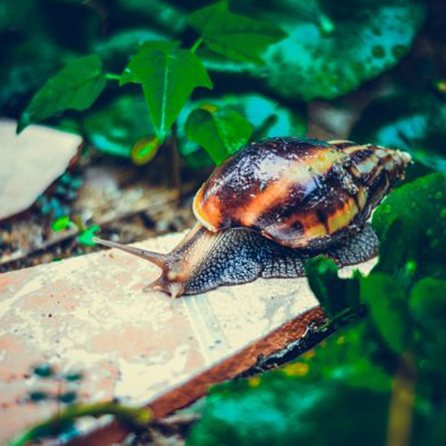 """Snail in the garden"" stock image"