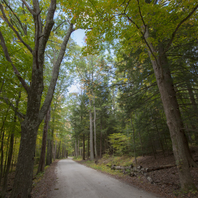 """Quite road, Forrest"" stock image"