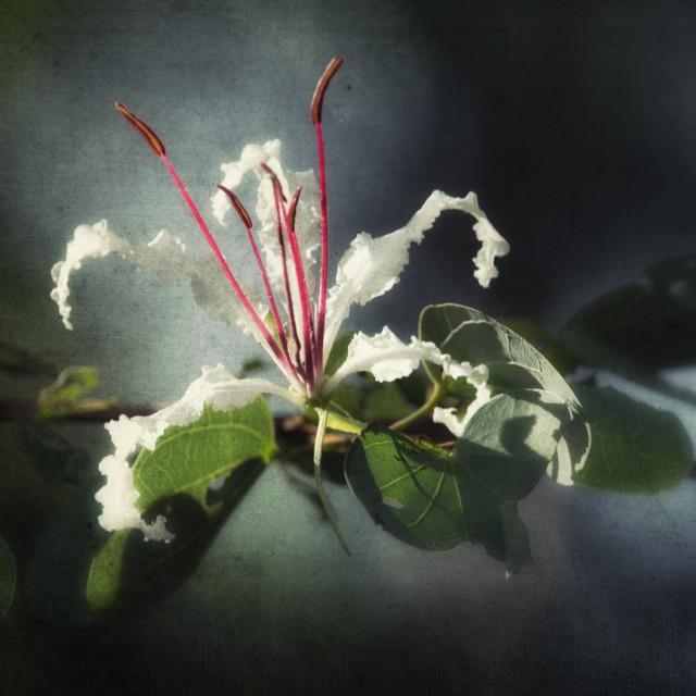"""Textured flower"" stock image"