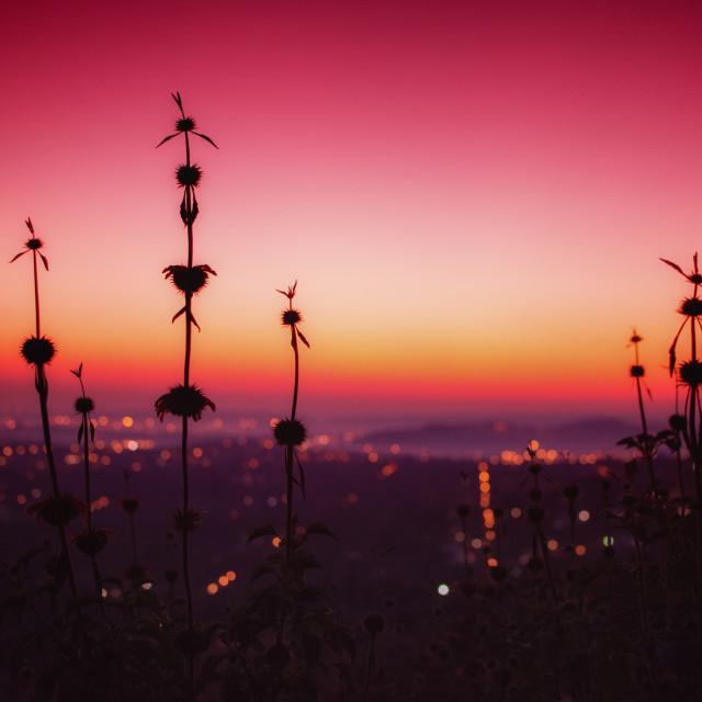 """Sunrise over Pretoria"" stock image"