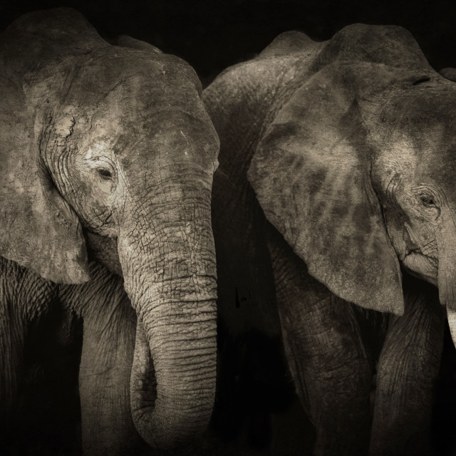 """Two elephants"" stock image"