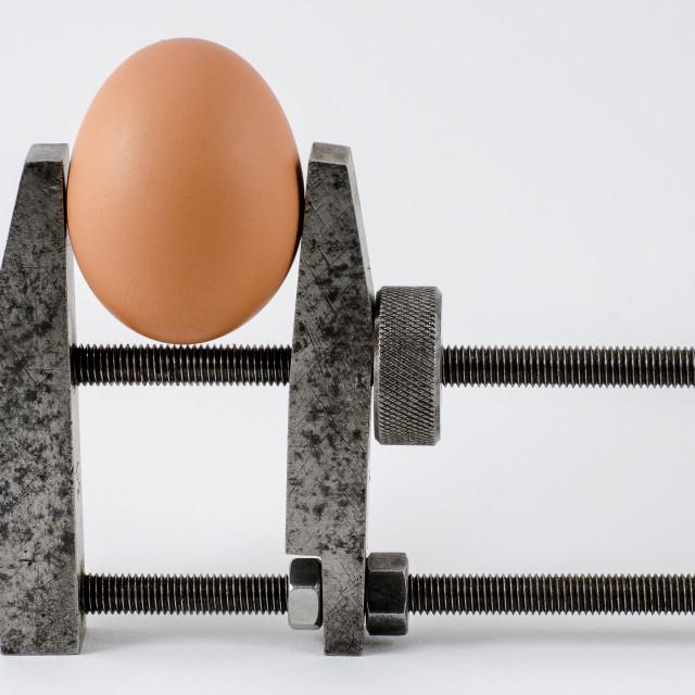 """Egg in vice"" stock image"
