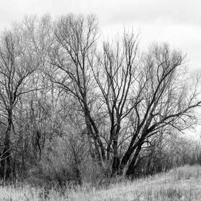 """Melancholic tree in winter"" stock image"