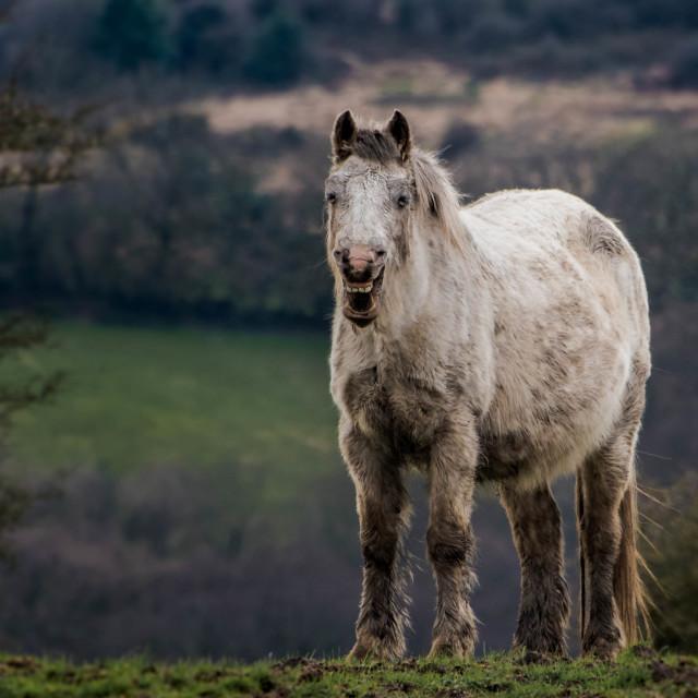 """""""Happy Horse."""" stock image"""