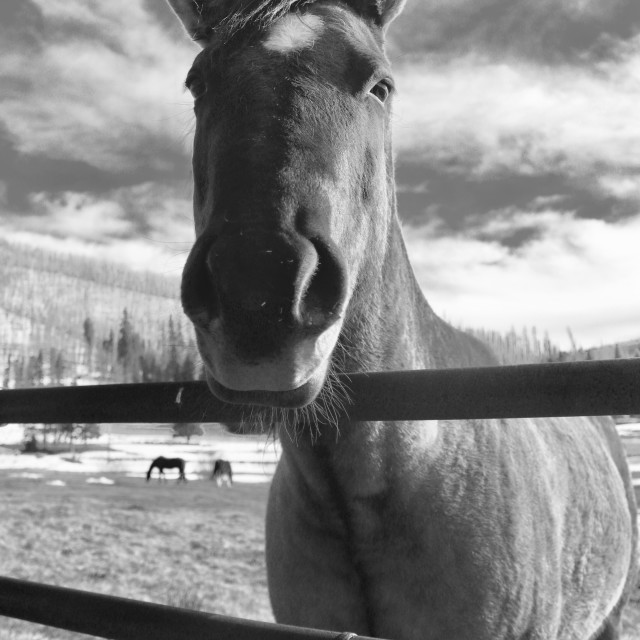 """""""Horse Stare"""" stock image"""