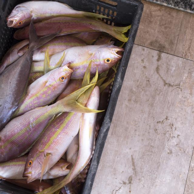 """fish for sale near of Yemanja temple"" stock image"