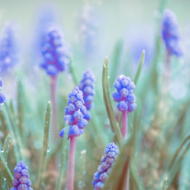 """""""spring awakening"""" stock image"""