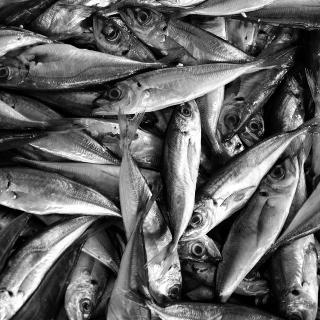 """Fresh fish in black and white"" stock image"