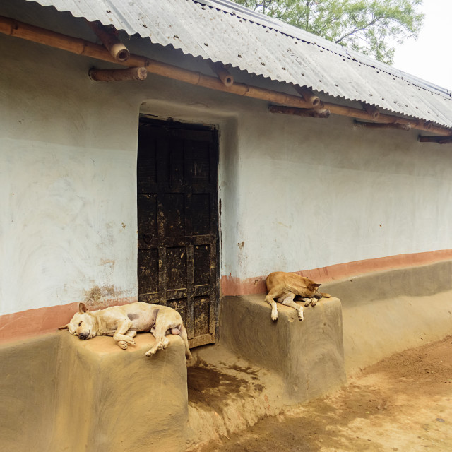 """A Santhal tribe village house, two stray dogs resting at doorway"" stock image"