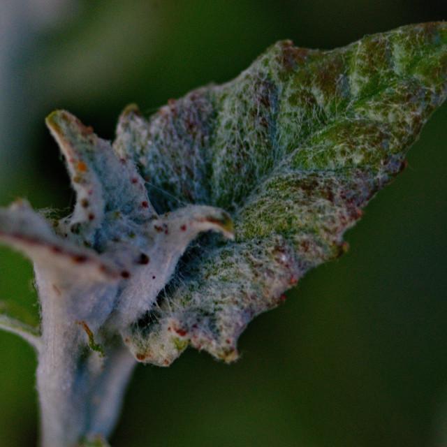 """unusual green leaf"" stock image"