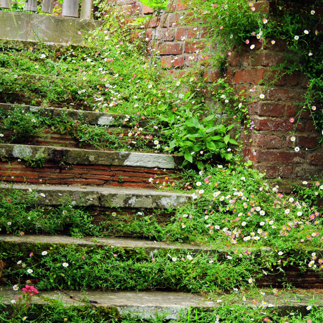 """Steps in a country garden."" stock image"