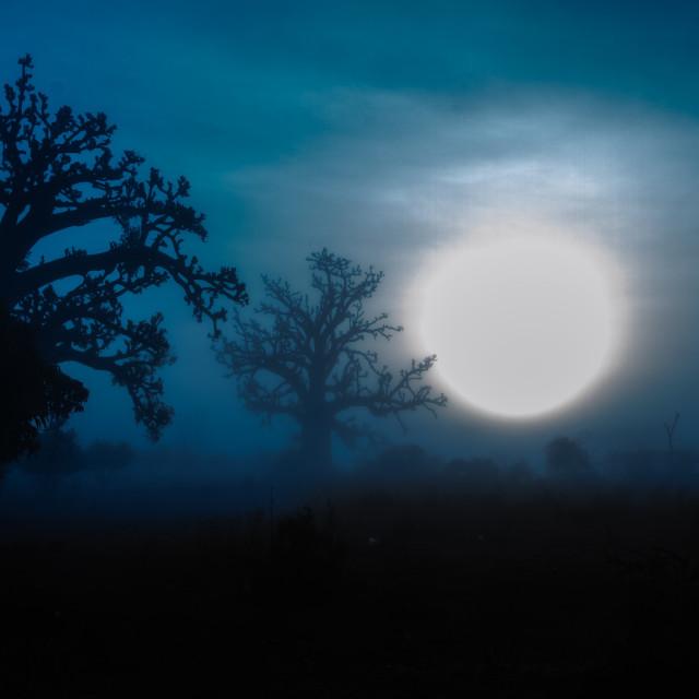 """""""Baobab sunrise"""" stock image"""