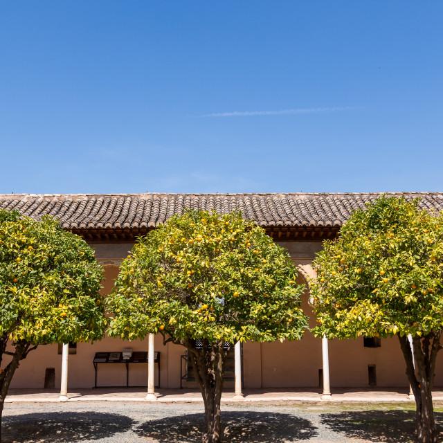 """""""Tres Orange Trees"""" stock image"""