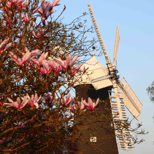 """Spring evening at Holgate Windmill"" stock image"