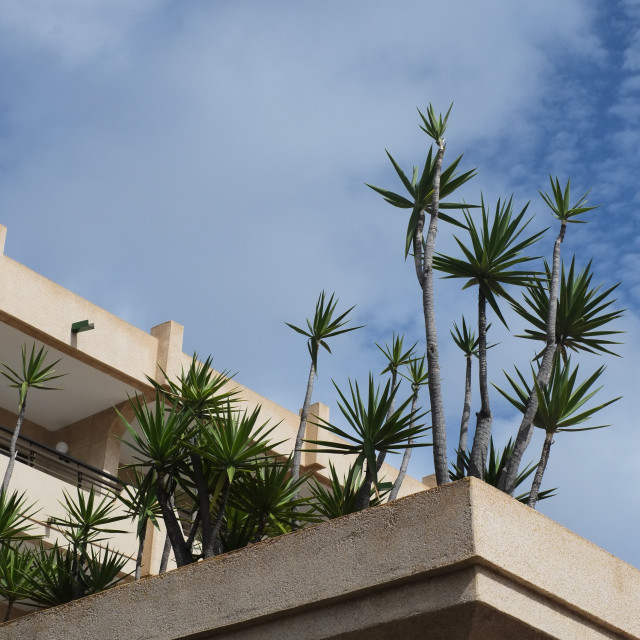 """Lanzarote Hotel Plants"" stock image"