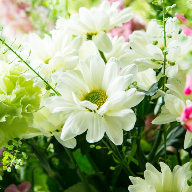 """Beautiful bouquet"" stock image"