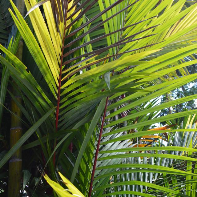 """Palm Trees In Australia"" stock image"
