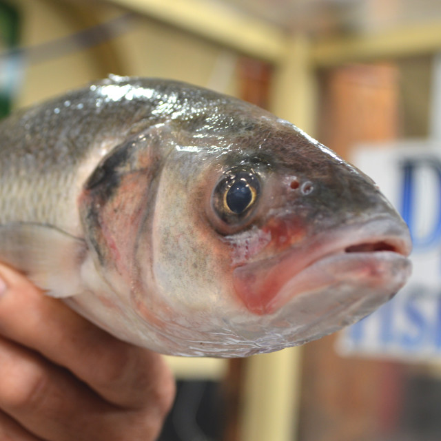 """""""Fish Face"""" stock image"""