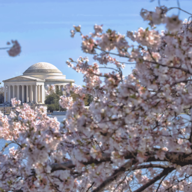"""The Jefferson Memorial through the cherry blossoms"" stock image"
