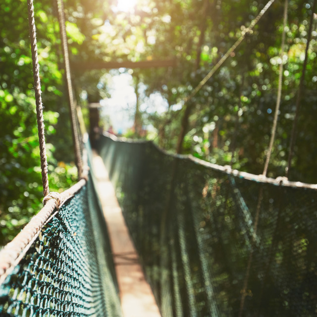 """Canopy walk in rainforest"" stock image"