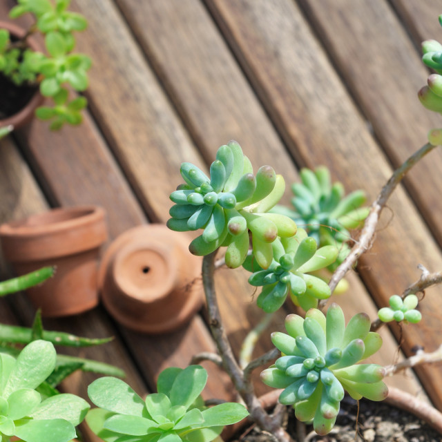 """close on succulent plant"" stock image"